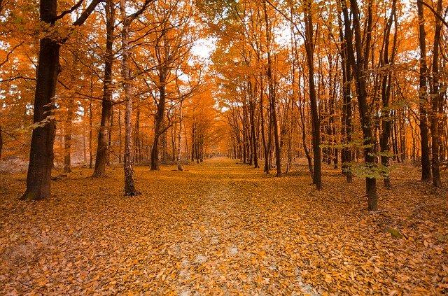 Herbststimmung im Wald